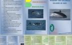 """Création de deux dépliants """"mer"""" et """"montagne"""" (en français et anglais), par les élèves de 2°1 (en partenariat avec le PNRC)"""