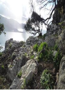 arases de la tour blanche du Castellu di Cinarca