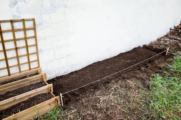Poursuite du nettoyage et premières plantations !