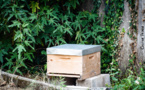 Notre ruche